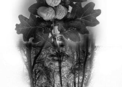 debowy las - Kopia