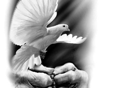 projekt2z golebiem